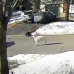 Watch a Hero Dog Stop Traffic When Her Owner Has a Seizure