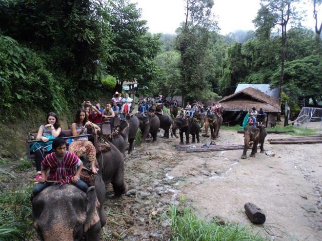 con-los-elefantes