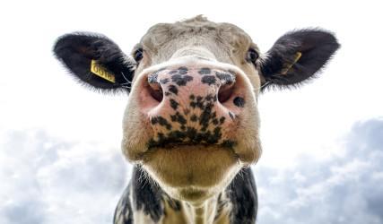 ridurre il consumo di carne