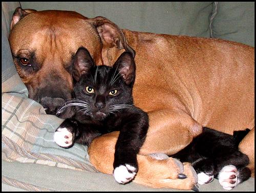 αγκαλιά εχθροί αγάπη