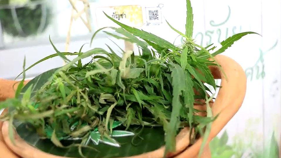 cannabis 03