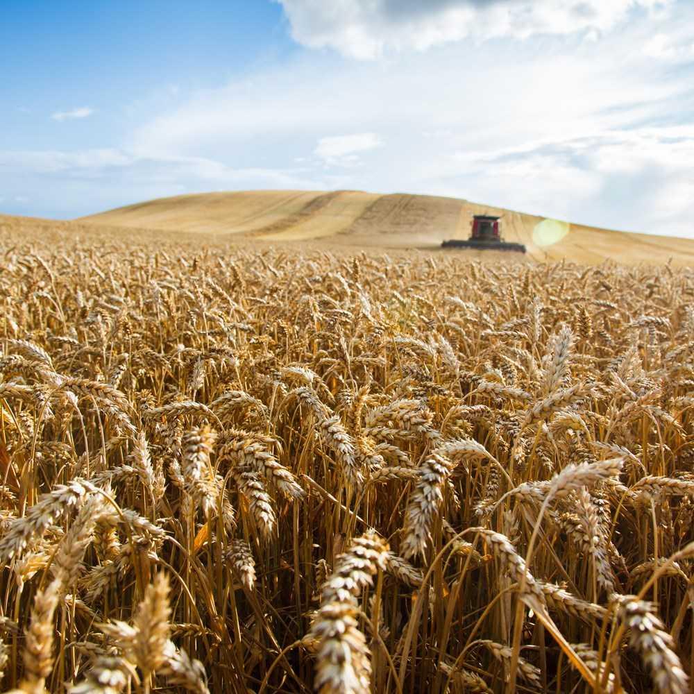 Pågens hållbarhetsarbete – med fokus på kretslopp och svenskt lantbruk