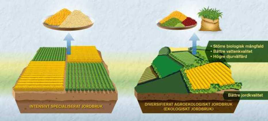 Jämförelser mellan ekologiskt och konventionellt jordbruk behöver bli bättre, enligt forskare 1