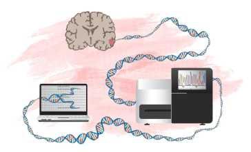 Ny metod att identifiera gener som kan driva hjärntumörer 1