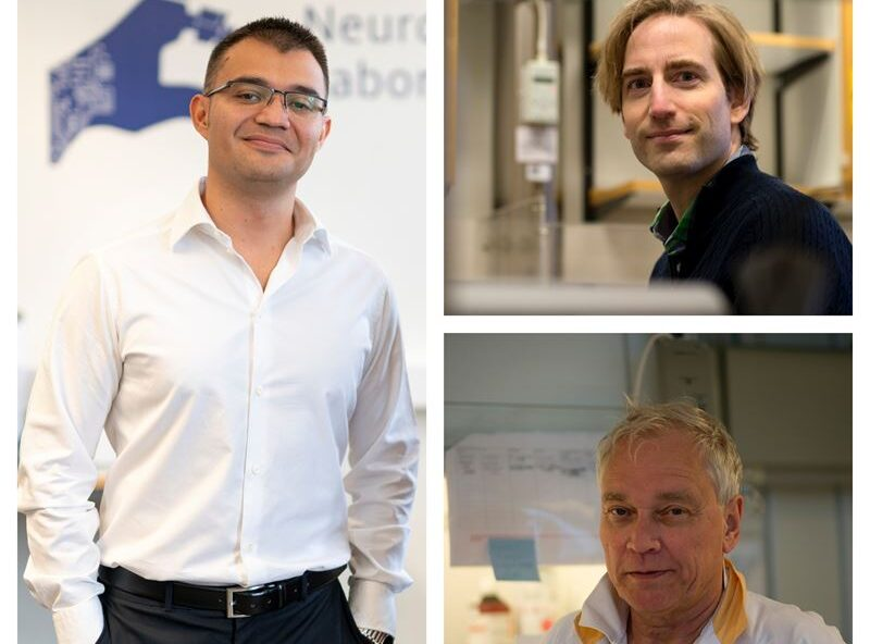 Miljoner i anslag till forskning inom cancer, njursjukdomar och ortopedi
