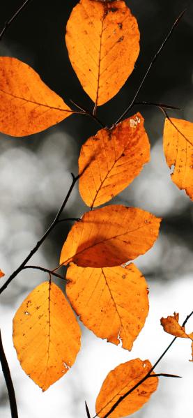 Fall-iPhone-XS-Max-wallpaper-unsplash-Jonah-Pettrich-768×1662