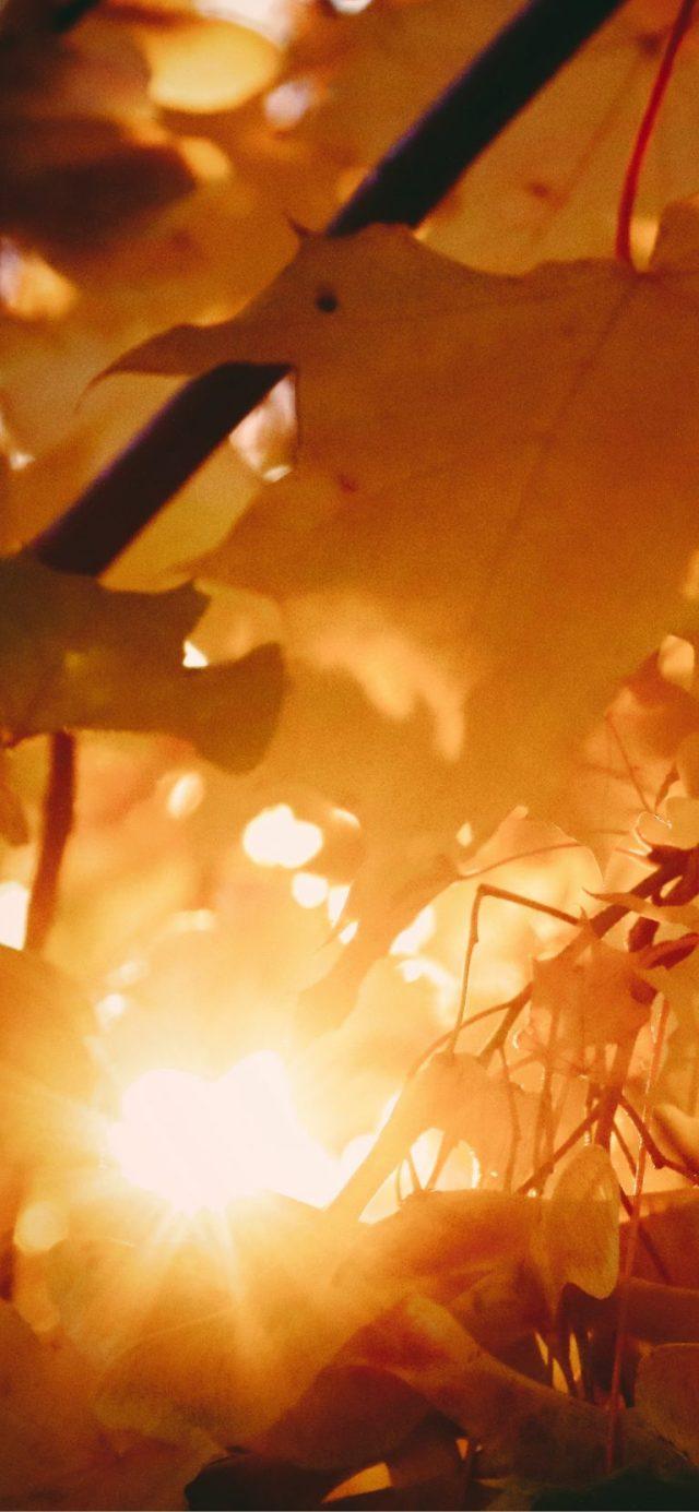leaf-autmumn-orange-iPhone-XS-Max-wallpaper-Timothy-Eberly-768×1662