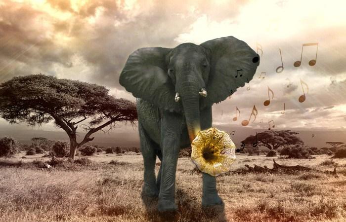 IT-elevernas konst ska rädda elefanten
