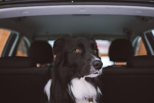 Checklista – Vad ska jag göra om jag ser ett djur instängt i en bil under en varm sommardag?