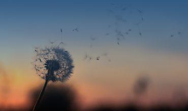Il senso della vita: qual'è il nostro scopo sulla Terra