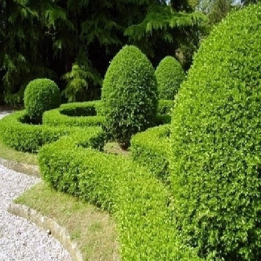 Foto Potatura Siepi e Piante In Giardino a Roma e Provincia di Alberomania 53624  Habitissimo