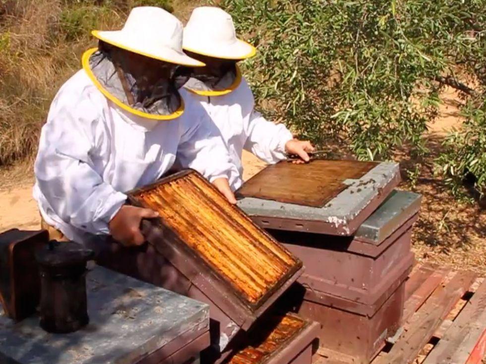 Els homes que parlaven amb les abelles