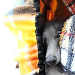 チラっ!外は寒い?