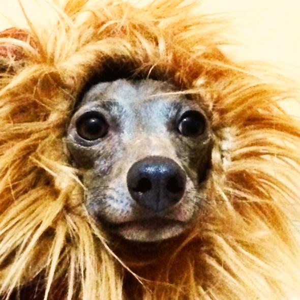 ライオンになりたい