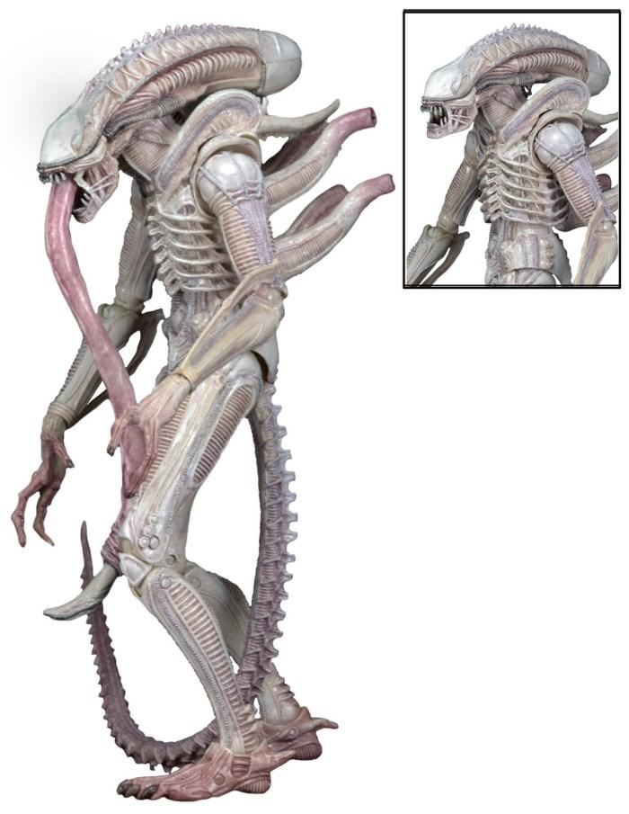 Albino-Alien-Aliens-Series-9-by-NECA-002