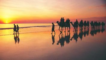 447715-broome-camel