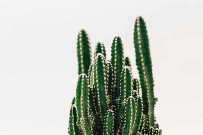 close up photography of cactus