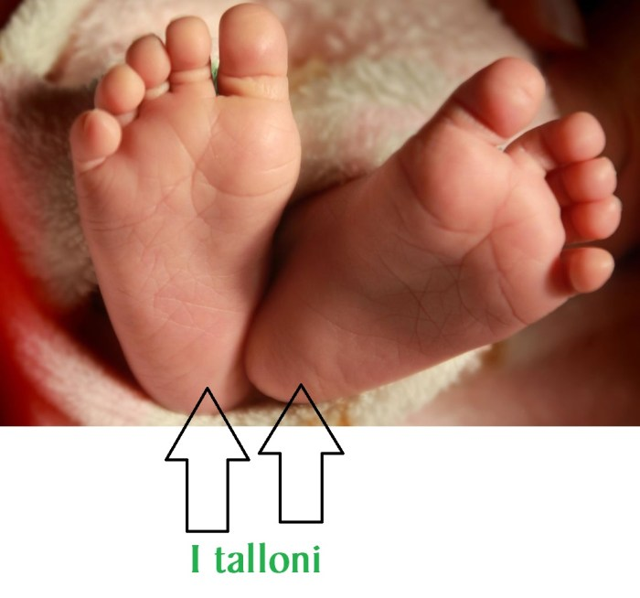147_talloni_immagine