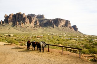 Horses at Superstition Mountain