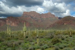 Saguaro Cactus and Mountains