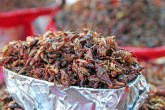 Chapulines, mexican food