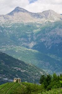 153533599-Valle d'Aosta vineyards
