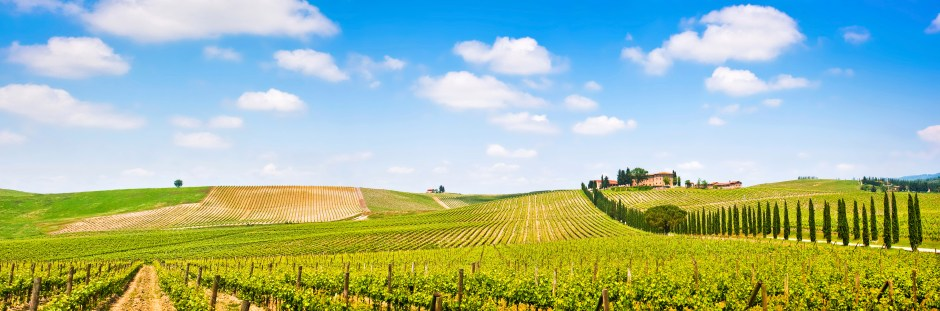 177299855-Vineyard panorama in Chianti