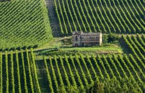 177745500-Vineyards, Marche