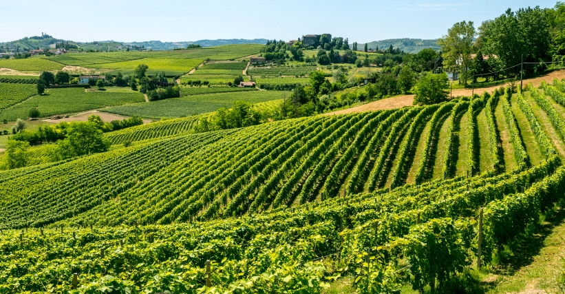 Some vineyards in the province of Cuneo