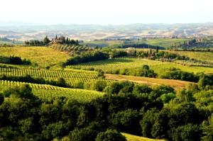 469690989-Tuscan hills and vineyards
