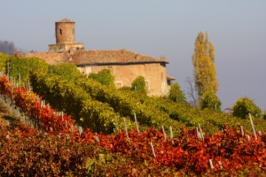 479140489-La Morra autumn vineyards