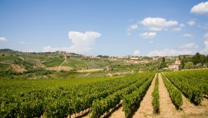 496476851-Tuscan hills and vineyards