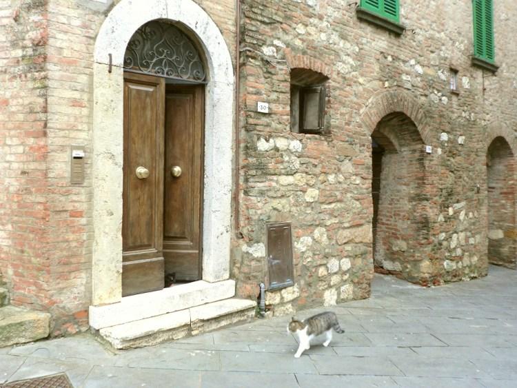 イタリアの猫ちゃん