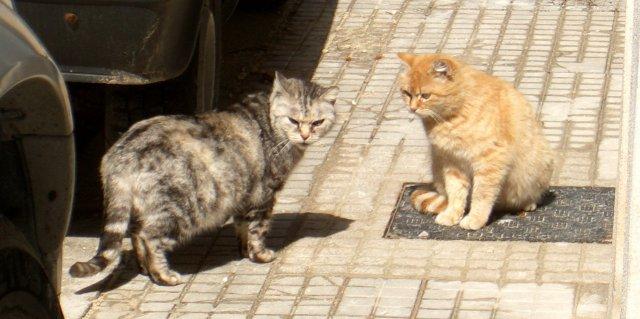 スポレートの猫