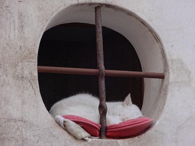 イタリアの昼寝猫