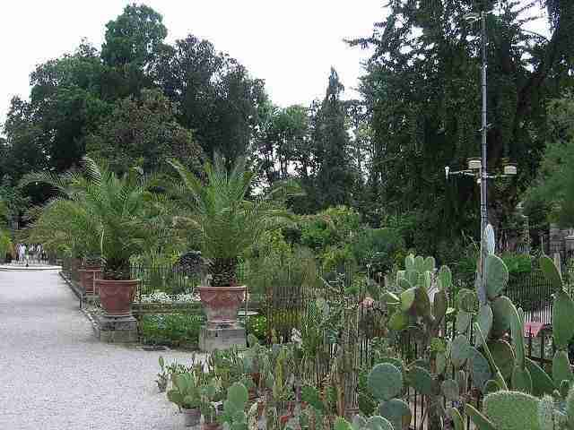 Rooted in Italy: The World's First Botanical Gardens