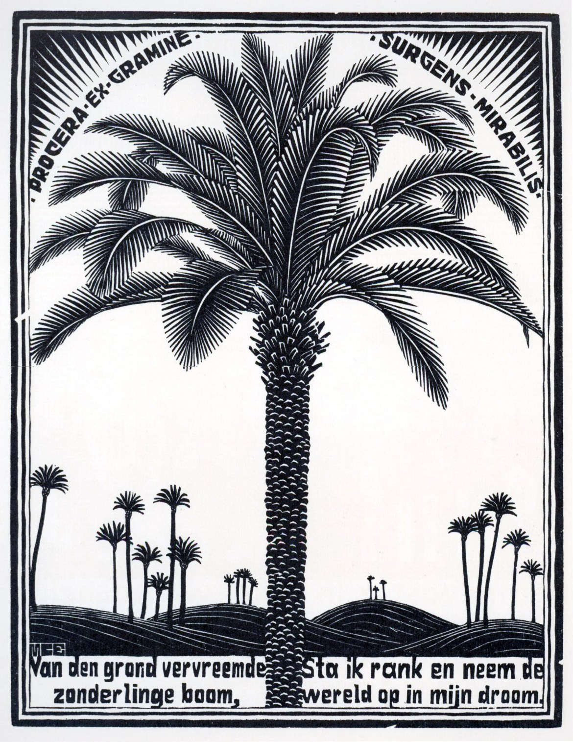 Maurits Cornelis Escher, Emblema VI,Palmboon_Palma, Marzo_Giugno1932, Collezione Federico Giudiceandrea