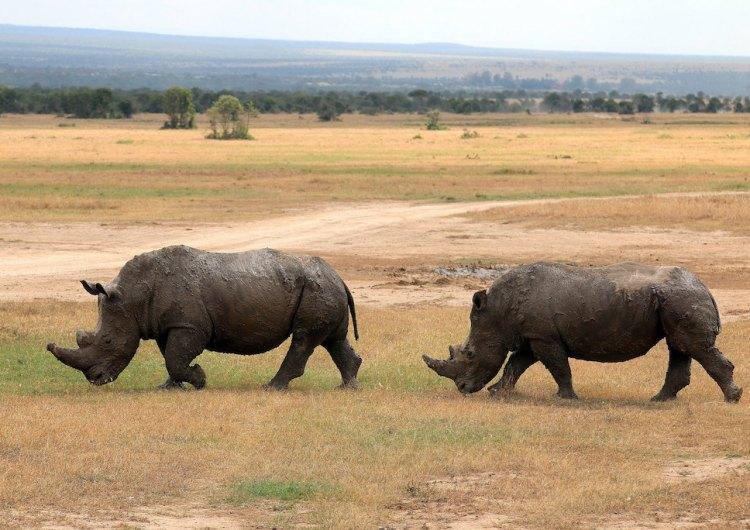 Hotel Bauer: una serata per la difesa del rinoceronte
