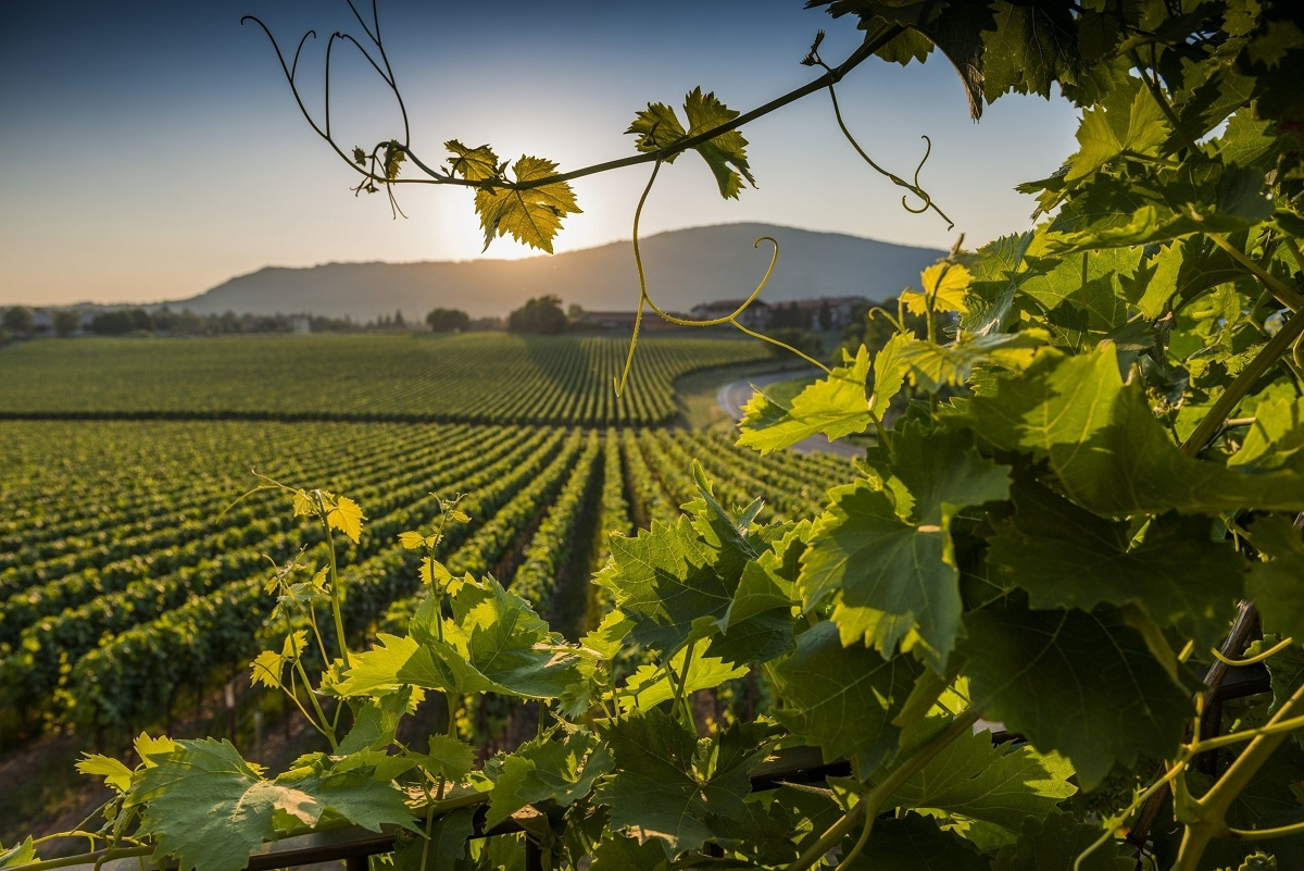 Franciacorta – quality wine and attentive tourism with a view to sustainable development