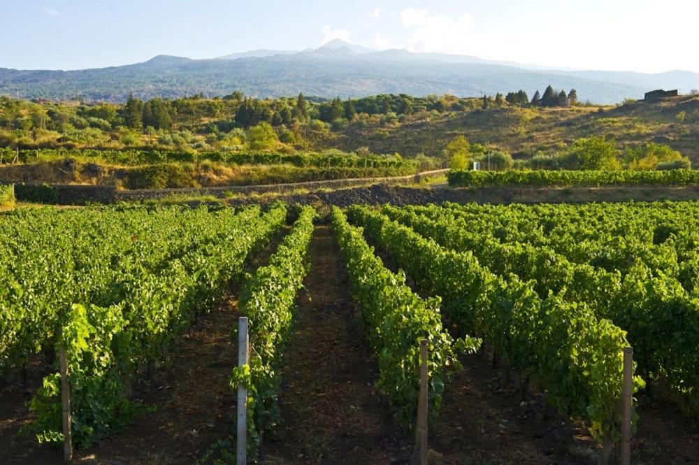 vineyard-bardolino-valpolicella