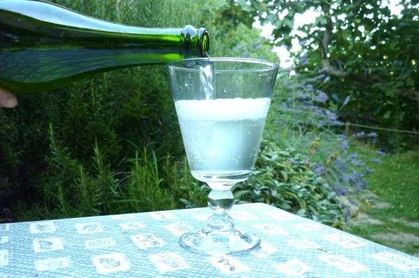 Газированный напиток из цветов бузины