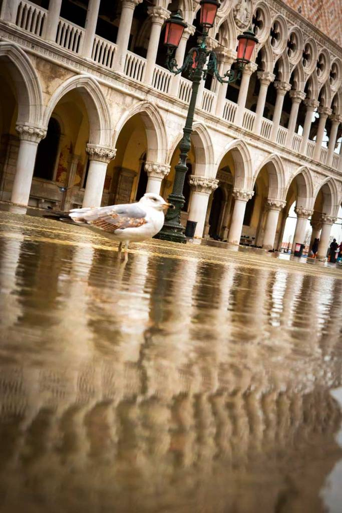 A seagull's perspective of the high waters in Venice.
