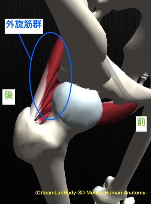 外旋筋 骨頭 後方