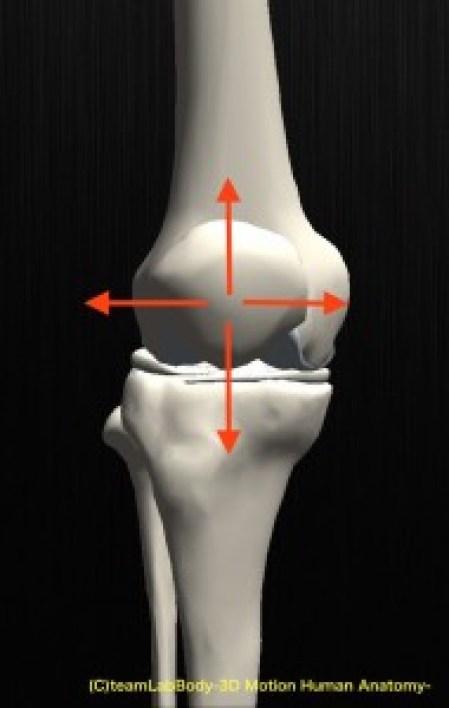 膝蓋骨 上下左右 動き