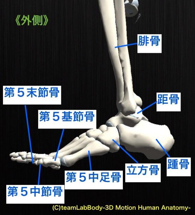 足根骨 外側