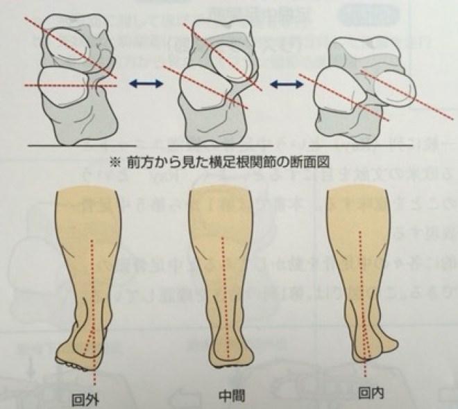 ショパール関節作用