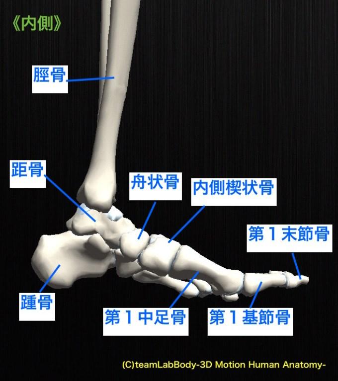 足根骨 内側