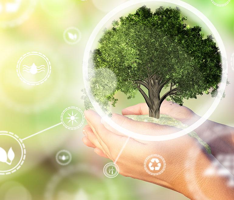 iqc leader di ecosistemi