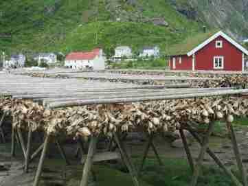 Partout sur les îles Lofoten des claies en bois servant au séchage des filets de poisson, que l'on trouve