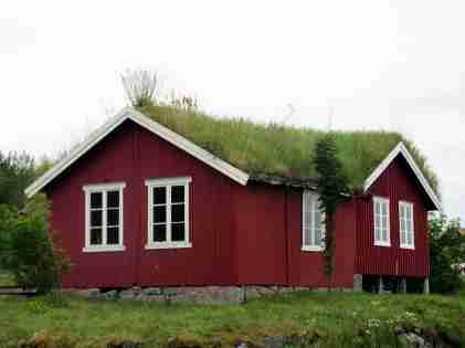 En parfaite symbiose avec la nature, les toits végétalisés